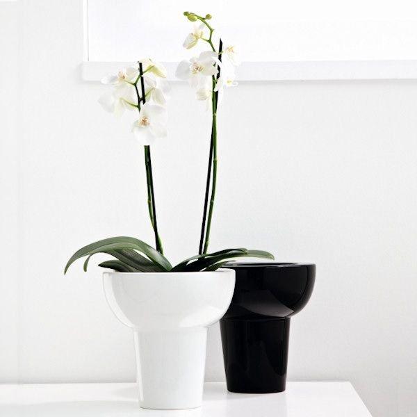 zimmerpflanzen versand zimmerpflanzen bl hend pflanzen. Black Bedroom Furniture Sets. Home Design Ideas